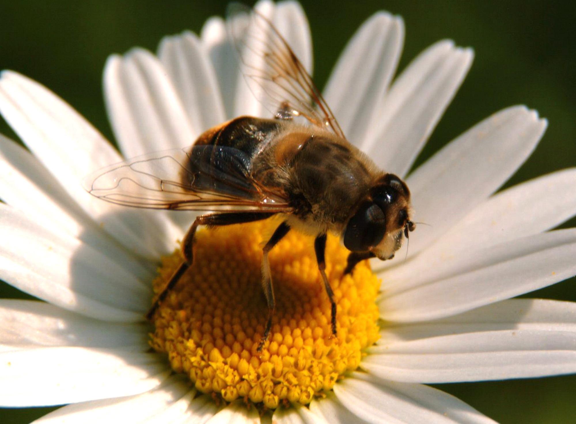 Inconvenienti estivi api vespe e zanzare